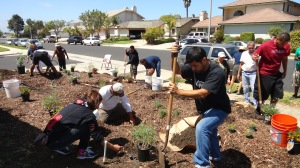Volunteers planting native plants at 700 Waverly Place, Oxnard